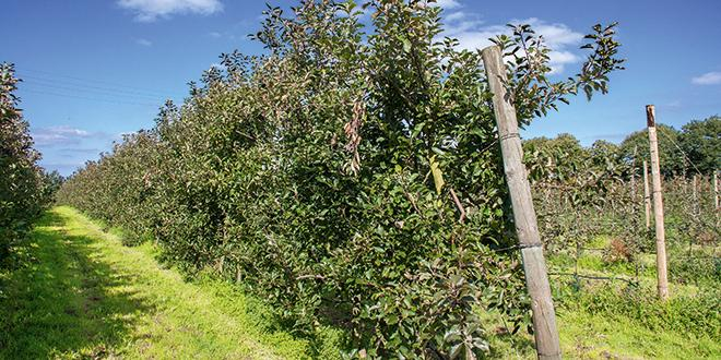 La liste des pépiniéristes agréés et cultivars 2016-2017 est disponible sur le site du CTIFL.