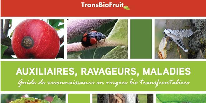 """""""Tout savoir qui n'est pas partagé est perdu"""" , proclament les partenaires de TransBioFruit : BioWallonie, le CRA-W (centre de recherches agronomiques) de Gembloux, la Fredon Nord - Pas-de-Calais et le Gabnor."""