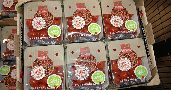 Avec un bon niveau de valorisation, la gamme de tomates cultivées sans pesticides « les Responsables » et les petits fruits ont permis de maintenir le chiffre d'affaires de Solarenn en 2018. Photo : D.Bodiou/Pixel6TM