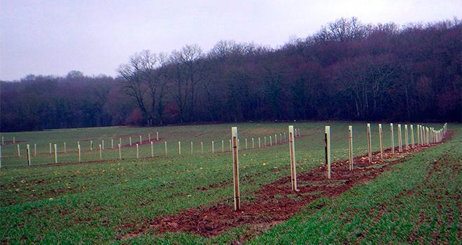 Les 4es rencontres des agroforesteries tempérées se tiendront à l'AgriCampus Poitiers Venours les 12 et 13 septembre 2018. Photo : Agroof