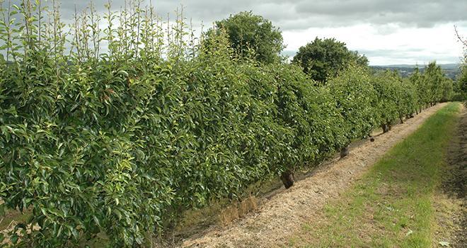 L'envoi des dossiers doivent être effectif au plus tard le 31 juillet pour les espèces hors fruits à noyaux, et le 15 septembre pour les fruits à noyaux. Photo: D. Bodiou/Pixel Image