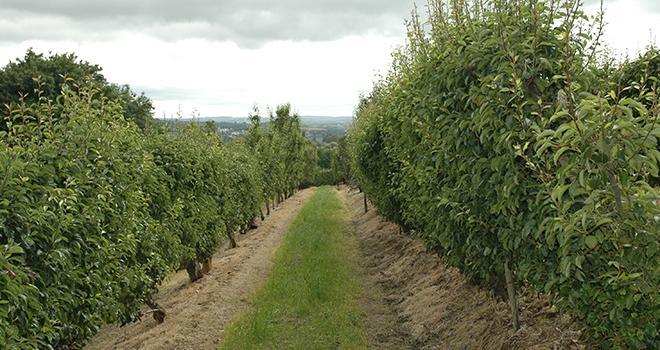 Entre 2010 et 2016, les surfaces agricoles moyennes sont en hausse de 14% en arboriculture fruitière, de 22% en maraîchage-horticulture. Photo : D. Bodiou/Pixel image
