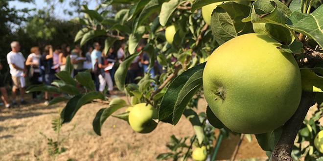 À l'occasion de la journée technique pomme chez Sud Expé, Matthieu Bouniol a insisté sur les mesures prophylactiques à mettre en place contre le feu bactérien. © A.Bressolier/Pixel Image