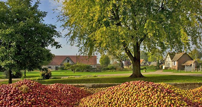 Selon les prévisions d'Unicid, le volume de production de pommes à cidre devrait s'élever à 275000 tonnes, en progression de 10% par rapport à une année moyenne. Photo : Unicid