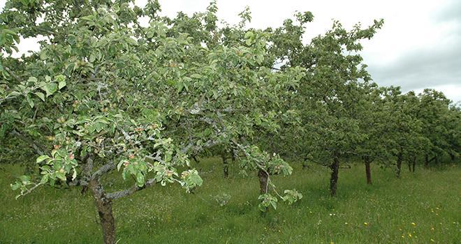 Le montant maximum de l'aide à la plantation est fixé à 1 000 € / ha. Photo : D. Bodiou/Pixel image