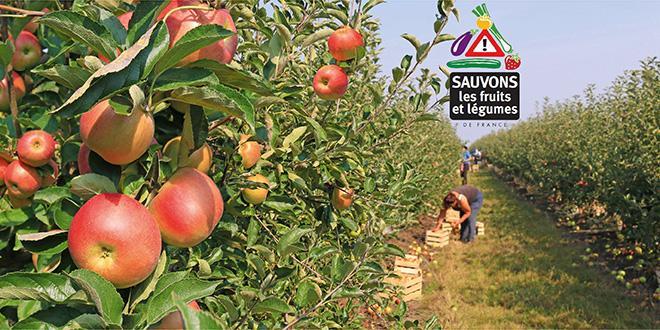 """Dans un communiqué le Collectif Sauvons les Fruits et Légumes tient à souligner qu' """"il n'y a pas d'hécatombe dans les campagnes à cause des pesticides"""" !"""