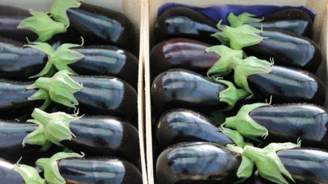 """Avec le rachat de JMO Prim, Arterris veut consolider sa filière """"légumes d'été"""". Photo : Arterris"""