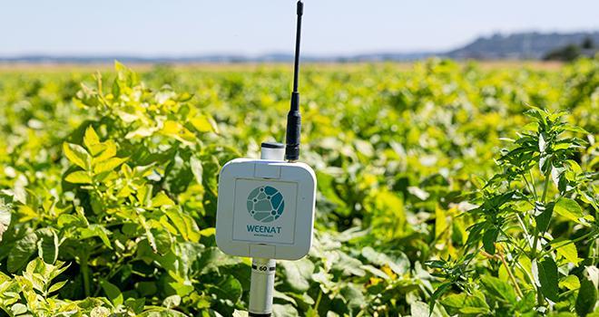 Des tests réalisés chez un producteur de pommes de terre dans le cadre du projet Weedriq ont conduit à des économies d'eau de l'ordre de 13 %. Photo Weenat