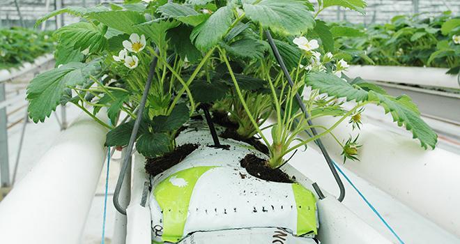 Les adhérents d'Afaïa vont continuer à approvisionner l'agriculture en intrants essentiels : fertilisants, supports de culture et biostimulants. Photo : D.Bodiou/Pixel6TM