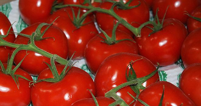 Une baisse des volumes de tomates est attendue pour juillet d'après Agreste. Photo : O.Lévêque/Pixel6TM