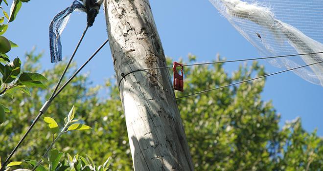 Début novembre, le Gouvernement a présenté sa stratégie nationale de déploiement du biocontrôle pour les cinq années à venir. Photo : O.Lévêque/Pixel6TM