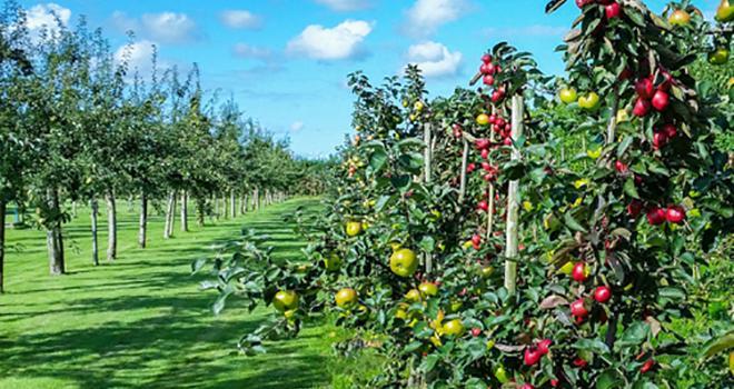 Le projet Trichoderma, porté par Cybèle Agrocare, doit permettre la mise au point de bio-intrants aux modes d'action innovants en arboriculture, maraîchage et viticulture. Photo : DR