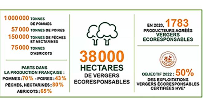 L'objectif affiché par VER d'atteindre 50 % de ses exploitations certifiées HVE est déjà atteint en pêche-nectarines et abricots.