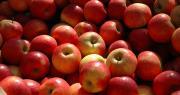 Fin février 2019, les stocks de pommes étaient inférieurs de 1 % à ceux de 2018 et de 10 % à la moyenne des cinq dernières campagnes. Photo : C. Poulain