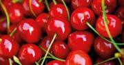Grande première : une production de cerises bénéficiera cette année d'un label Rouge. Photo : Fotolia