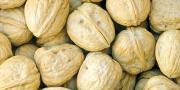 Après une baisse en dessous des 8 000 tonnes en 2014, la production de noix de Grenoble devrait atteindre cette année les 10 000 tonnes.