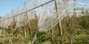 La pose de filets anti-insectes contre le carpocapse dans les vergers de pommiers est une des sept actions CEPP validées pour l'arboriculture fruitière. Photo : A.Bressolier/Pixel Image