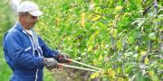 La formation délivrera notamment un diplôme de taille et des attestations de formation à la conduite de plate-forme élévatrice arboricole, de passage du Certiphyto et de passage des Caces 8 et 9.