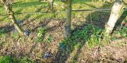 Mieux connaitre les sols pour limiter les pertes en verger ou en post-récolte: voilà tout l'enjeu de l'enquête lancée par le GIS Fruits.