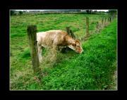 L'herbe n'est pas toujours plus verte ailleurs