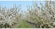 L'envoi des dossiers doivent être effectif au plus tard le 31 juillet pour les espèces fruitières hors espèces à noyaux, et le 15 septembre pour les fruits à noyaux. Photo: L.Rubio/Pixel Image