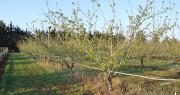 644 exploitations spécialisées dans l'arboriculture et 340 dans le maraîchage étaient certifiées HVE au 1er juillet 2020. Photo : C.Even/Pixel6TM