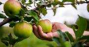 Une « Rencontre technique fruits bio » aura lieu le jeudi 28 mars 2019 au centre CTIFL de Balandran. Photo : Sushytska/Adobe stock