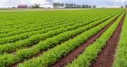 En France, entre 300 000 et 350 000 tonnes de carottes en moyenne sont produites chaque année. Photo : Ruud Morijn/Adobe stock