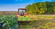 Sur les 5 dernières années, la progression des surfaces cultivées en bio varie entre 200 000 et 300 000 hectares supplémentaires engagés en bio chaque année. Jürgen Fälchle/Adobe stock