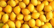 L'épidémie de coronavirus a fait exploser le cours mondial du citron. Photo : Simon Coste/Adobe stock