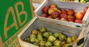 Le Grab organise son AG en ligne, pour promouvoir les pratiques agroécologiques malgré le confinement. Photo : illustrez-vous/Adobe stock