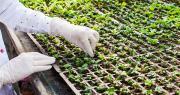 27 organisations représentatives de la filière agricole, dont le CTIFL, demandent que le Gouvernement français préserve un principe d'innovation en lien avec l'avis du Conseil d'État sur la mutagénèse. Oksix/Adobe Stock
