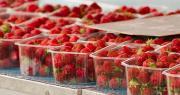 Les présidents des Jeunes Agriculteurs du Vaucluse (JA84) et de la FDSEA 84 viennent de lancer un appel à la grande distribution : mettez en avant les fruits et légumes locaux à des prix « attrayants » pour les consommateurs. Photo : ALF photo/Adobe stock