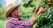 Au plus tard en 2022, les retraites des chefs d'exploitation à carrière complète atteindront 85 % du Smic. Photo : bobex73/ Adobe Stock