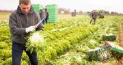 Les employeurs de la production agricole et des Cuma n'ont plus que quelques jours pour mettre en place les règles de la nouvelle convention collective nationale. Photo JackF/Adobe Stock