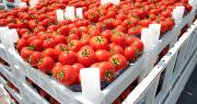Avec le ToBRFV, les conditions de mise en œuvre de la certification phytosanitaire à l'exportation évoluent. Photo : jahmaica/Adobe stock