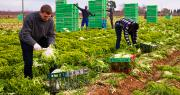 L'agence espagnole Terra Fecundis envoie chaque année des saisonniers étrangers en France. Elle est actuellement inquiétée dans une affaire de dumping social. Photo : JackF/Adobe stock