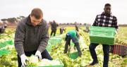 Le Gouvernement a lancé la plateforme « Mobilisation exceptionnelle pour l'emploi ». Photo : JackF/Adobe stock