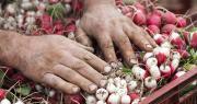 Le Trophée du maraîchage vise à mettre en lumière les actions innovantes des producteurs de légumes. Photo : STUDIO GRAND WEB/Adobe Stock
