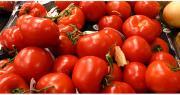 Les importations massives de tomates poussent les producteurs français à écarter une partie de leur production, selon Légumes de France. Photo : Neelrad/Adobe Stock