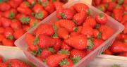 """La fraise, déjà classée en """"prix anormalement bas"""", sera bientôt déclarée en crise conjoncturelle. Photo : iMAGINE/Adobe stock"""