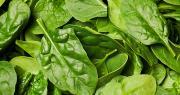 Les feuilles d'épinards NA sont cultivées sans herbicides et sans engrais chimiques de synthèse. Photo : Christine/Adobe stock
