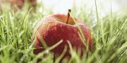 Ariane, LA pomme engagée pour le climat.