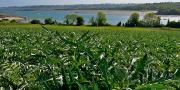 Du 19 juin au 14 juillet, un panel de près de 150 000 personnes va être sensibilisé à l'artichaut, légume emblématique de la côte Nord bretonne.