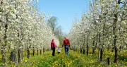 Le syndicat des fruits de Savoie organise la première balade gourmande au cœur des vergers de Savoie. Photo syndicat des fruits de Savoie