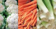 Sur l'ensemble de la campagne, toutes les récoltes reculent, sauf celles de poireau et de racines d'endive, tandis que les cours diminuent (hormis la carotte), tirant les chiffres d'affaires à la baisse. Photos: DR