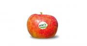 En tout, ce sont 2 228 tonnes de pommes Antarès® qui ont été récoltées en 2018. Photo : Antarès
