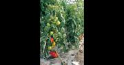 « L'interdiction du chauffage des serres pour la production de fruits et légumes bio n'aurait de sens qu'en étant prise au niveau européen », estime Olivier Allain, vice-président de la Région Bretagne à l'agriculture. Photo : DR