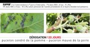 FLiPPER® est autorisé jusqu'au 17 juillet 2020 pour lutter contre le puceron cendré du pommier et le puceron mauve du poirier, indique l'entreprise De Sangosse. Photo : DR