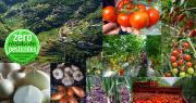 """108 références """"zéro résidus de pesticides"""" sont déjà proposées en rayon. """"Nous doublerons probablement en 2019"""", annonce le collectif Nouveaux champs. Photo : Nouveaux champs."""